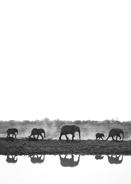 - Black and white photograph of elephants walking on a line with reflections in a lake