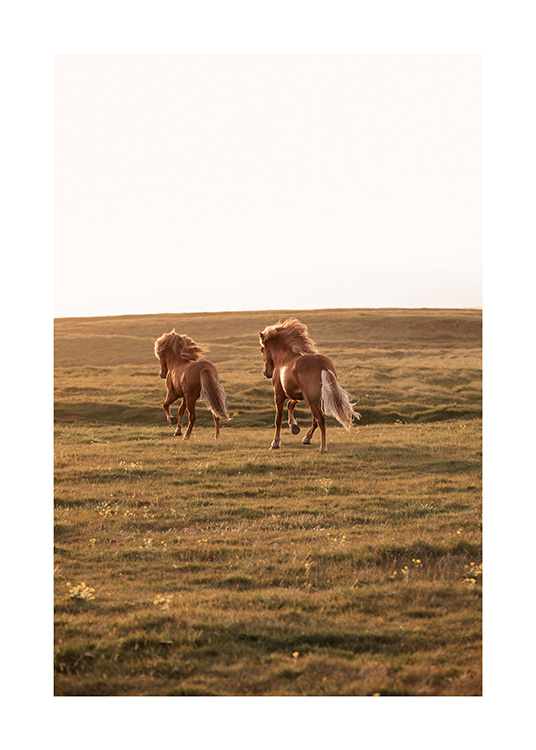 - Photograph of sunset with two horses running on green meadow towards the sun