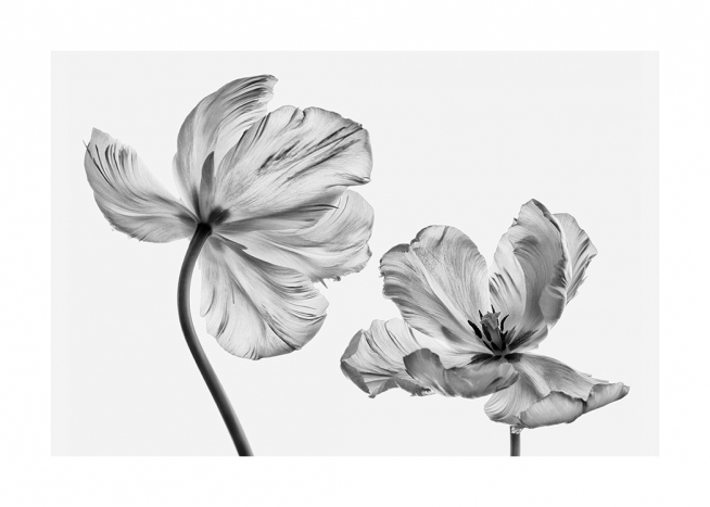 Black and White Tulips Poster / Flowers at Desenio AB (13613)