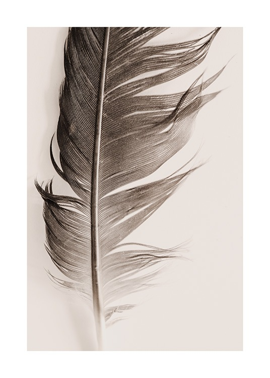 Feather Beige Poster / Nature prints at Desenio AB (13646)