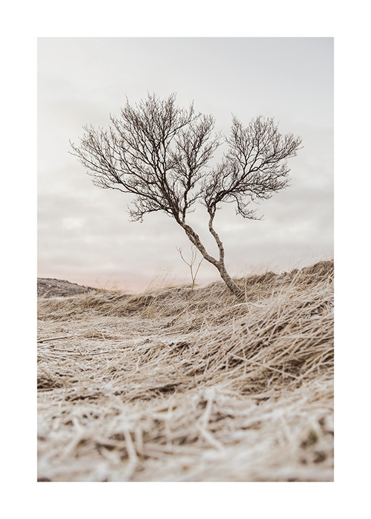 Bare Tree Poster / Nature prints at Desenio AB (13679)