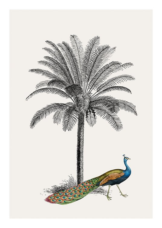 Royal Botanical Peacock Poster / Birds at Desenio AB (13733)