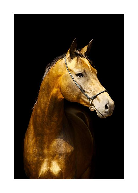 Glowing Horse Poster / Horses at Desenio AB (13763)