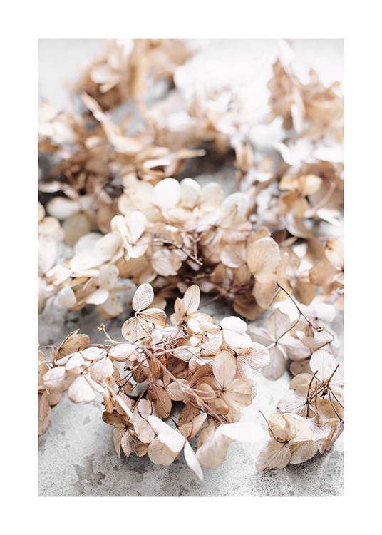 Dried Hydrangea Flowers Poster / Flowers at Desenio AB (13827)