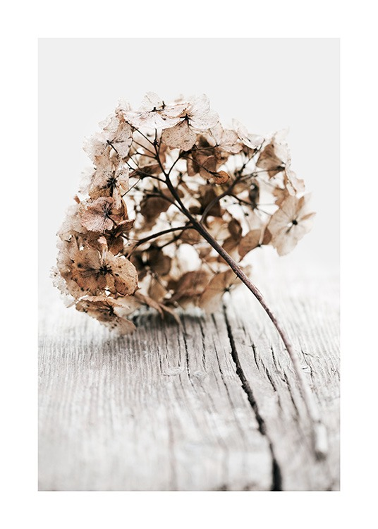 – Photograph of a dried hyrdrangea twig with beige leaves on a wood background