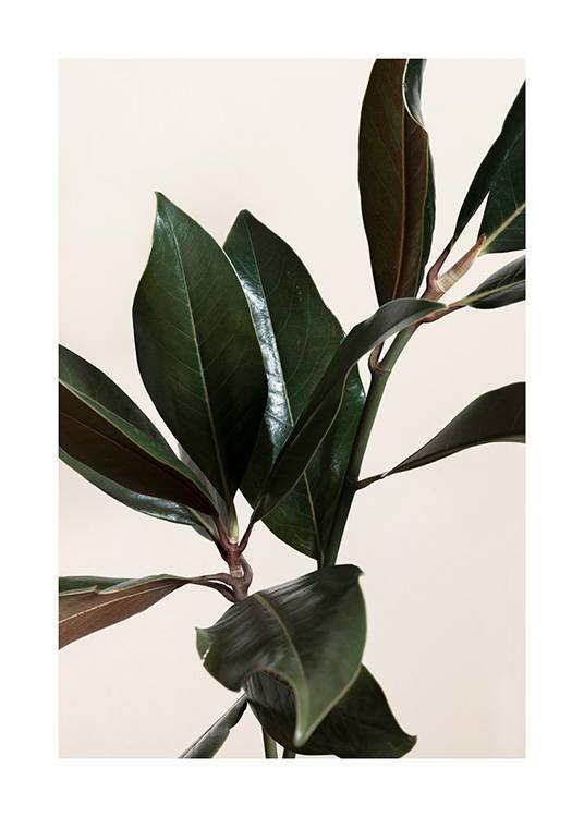 Magnolia Leaves No1 Poster / Green plants at Desenio AB (13839)