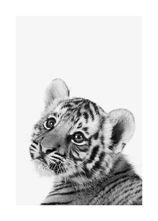 Baby Tiger Poster / Animals at Desenio AB (13857)