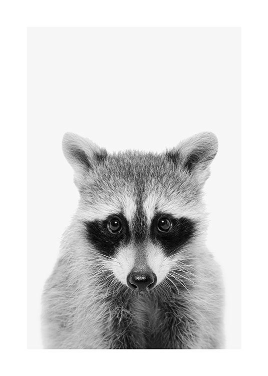 Baby Raccoon Poster / Animals at Desenio AB (13863)