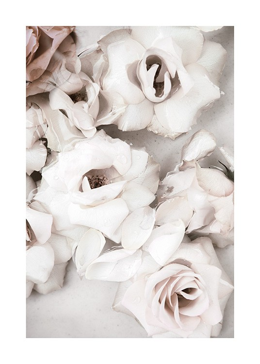 Close up White Roses Poster / Flowers at Desenio AB (13875)