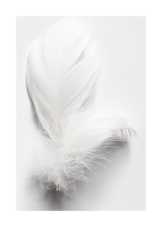 White Feathers Poster / Black & white photography at Desenio AB (13882)