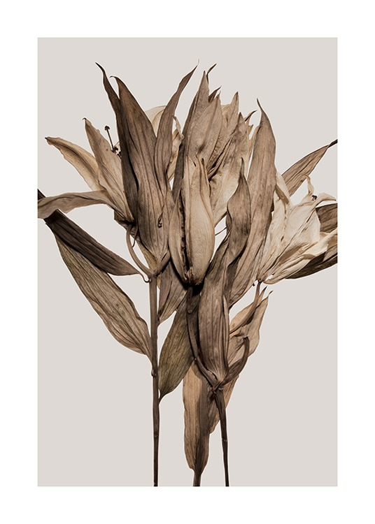 – Photograph of brown dry leaves and dry lilies against a grey background