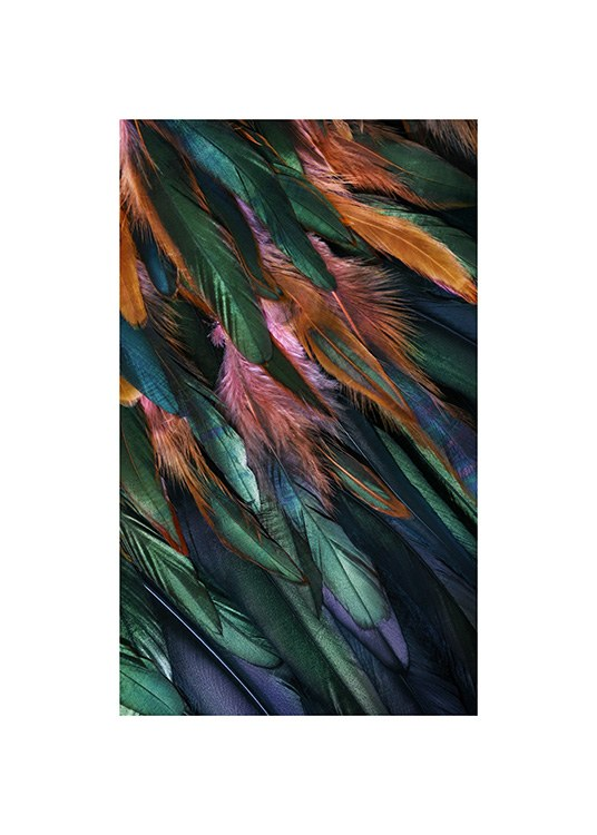 – Photograph with details of colourful bird feathers in blue, green, orange and pink