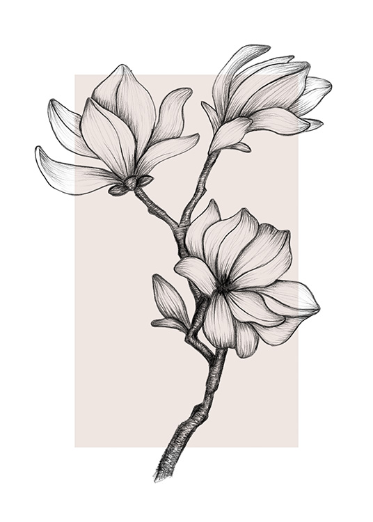 - Hand made drawing of magnolia blossoms on a stem against a light pink background