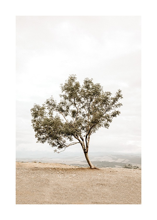 - Photograph of a leaning tree standing on a hill with a foggy landscape in the background
