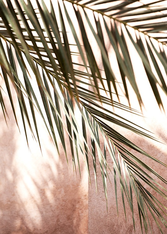 - Close up photograph of palm leaves and shadows against a pink background