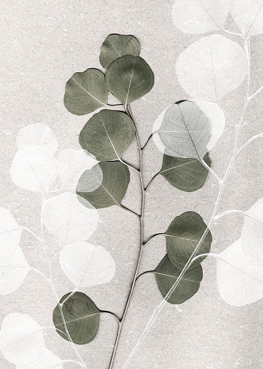 – Photograph of a green and white eucalyptus branch on a stone background in beige