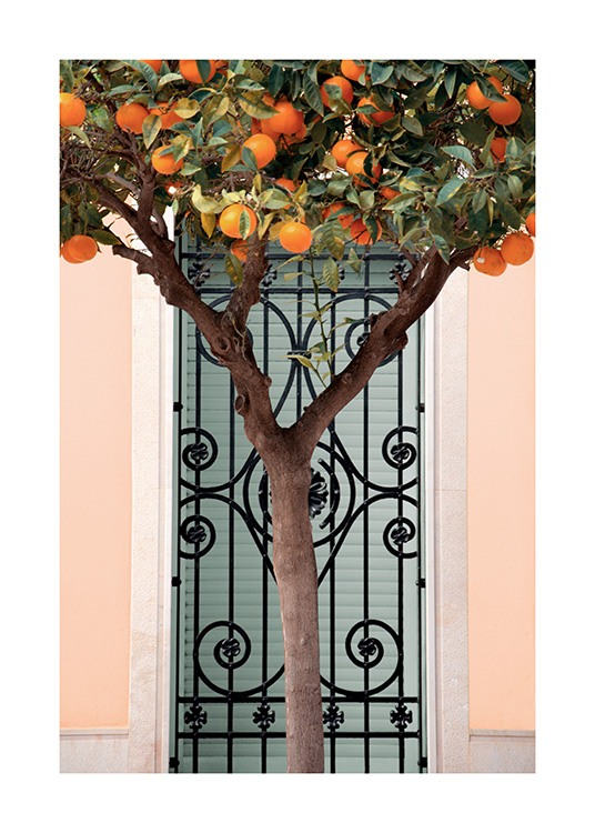 – Photograph of a tree with oranges standing in front of a pink building with a black gate