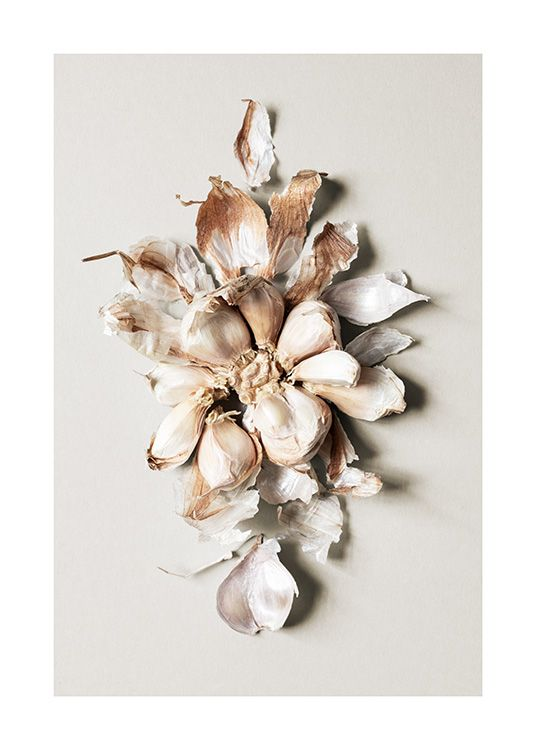 – Photograph of a garlic bunch in the shape of a big flower against a beige background