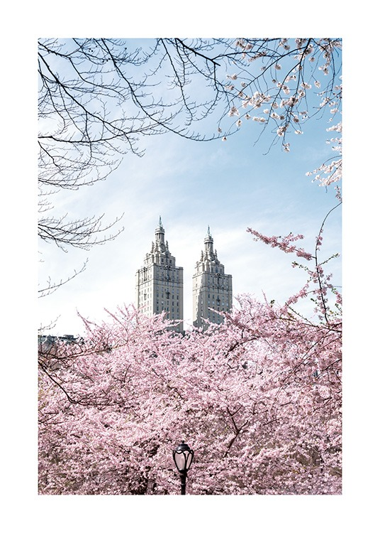 – Photograph of cherry trees in front of two towers with a blue sky behind them