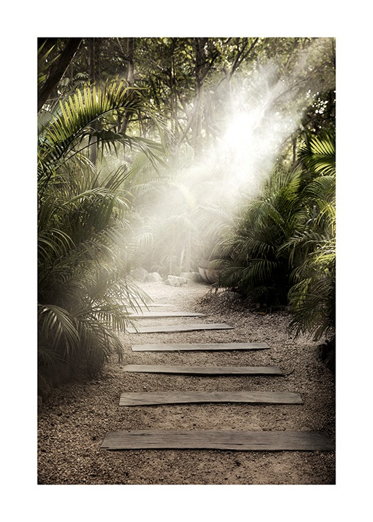 – Photograph of palm leaves surrounding a trail in the sunlight