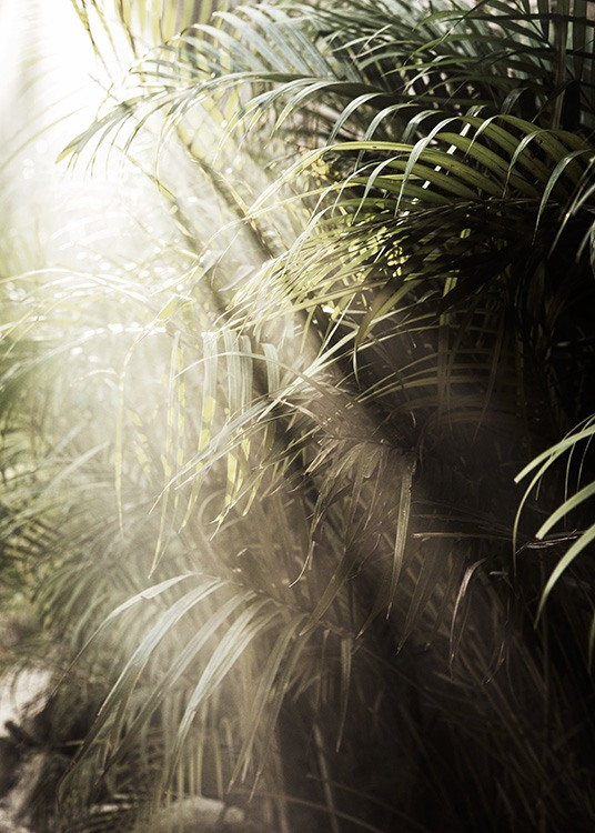 – Photograph of sunlight shining on green palm leaves