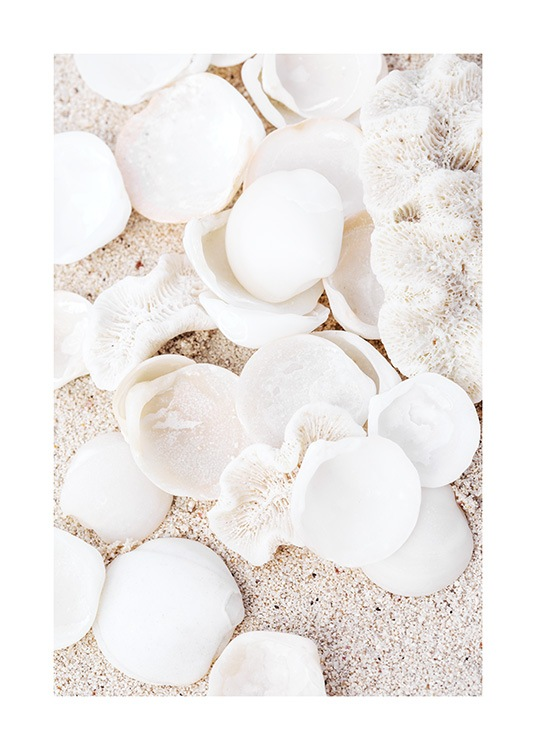 – Photograph of white, round seashells and beige corals with sand behind them