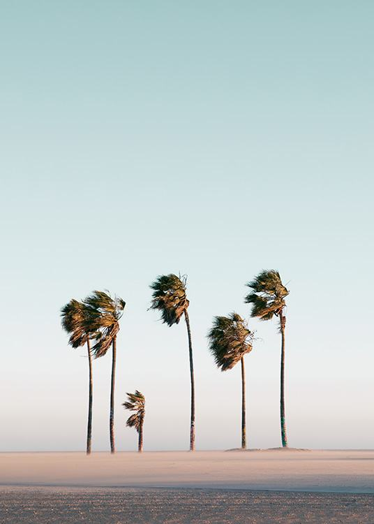 – Photograph of palm trees on a beach, blowing in the wind