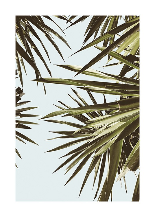 – Photograph of palm leaves in green in front of a blue sky