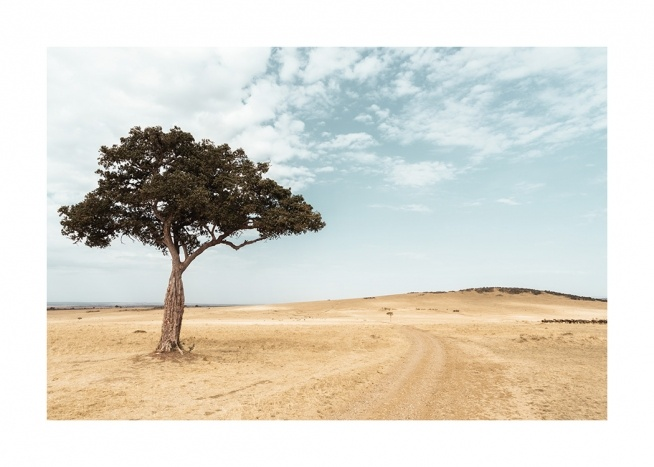 – Photograph of a savannah with an acacia tree in front of a blue sky
