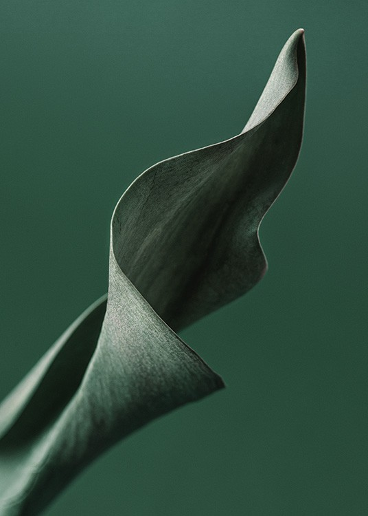– Photograph with close up of a green tulip leaf with a dark green background