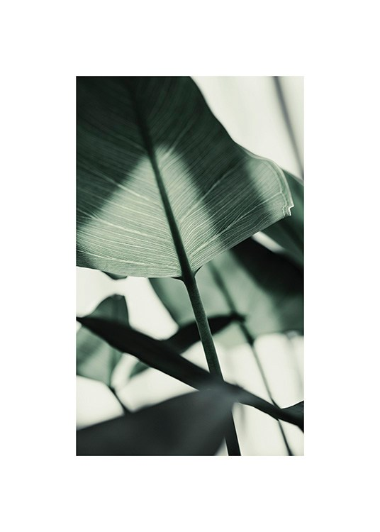 – Photograph of a sunlit, green leaf with blurred leaves in the background