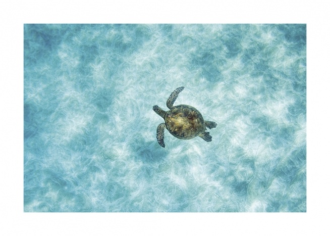 – Aerial photograph of a sea turtle swimming in the ocean with clear blue water