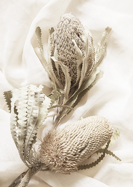 – Photograph of a pair of dried flowers in beige, against a white fabric as background