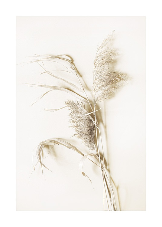 – Photograph of dried grass in beige against a light beige background