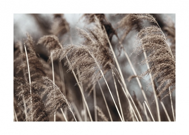– Photograph of dried, beige grass in a field