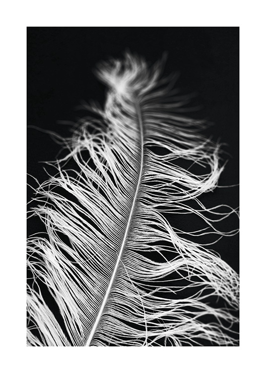 – Black and white photograph with close up of a feather against a black background