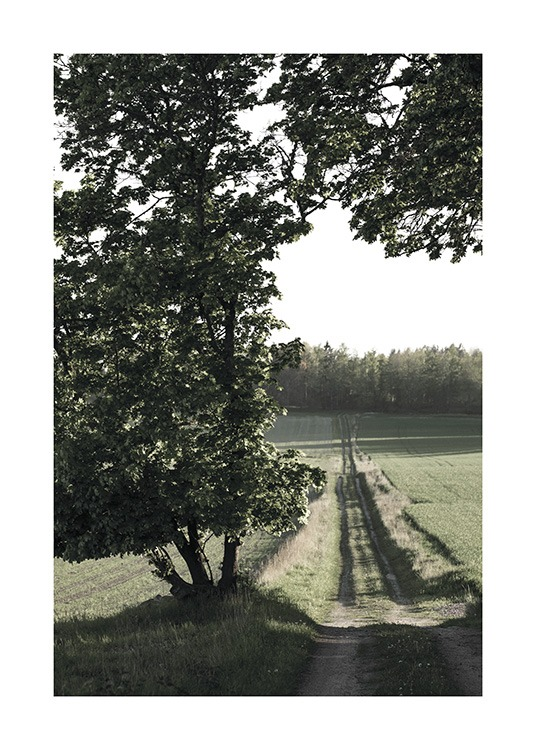 – Photograph of a small country road and fields with a large tree in front of them