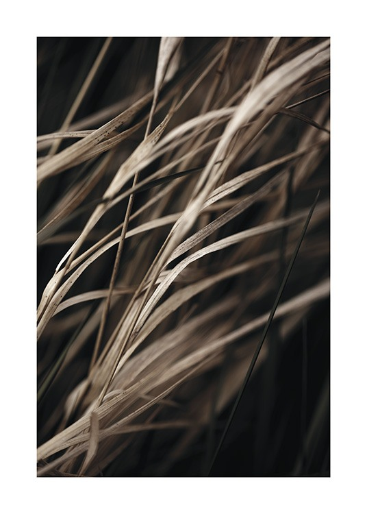 – Photograph with close up of dried grass in brown