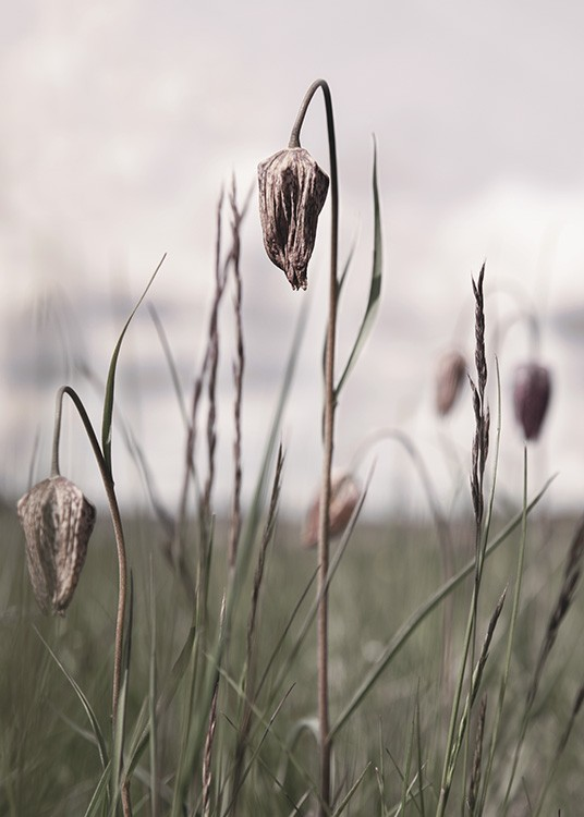 – Photograph with close up of dried flowers and grass in a field