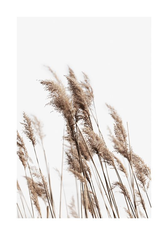 – Photograph of a bundle of beige reeds, swaying in the wind