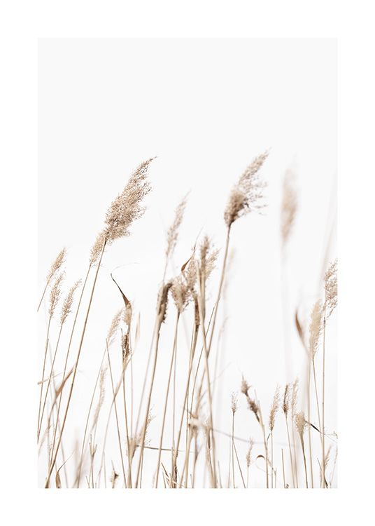 – Photograph of beige reeds against a light grey background