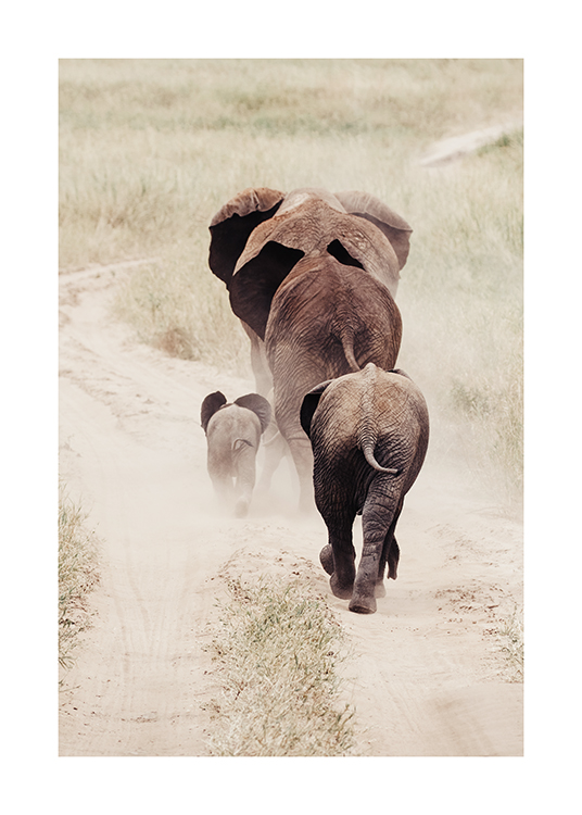 – Photograph of elephants seen from behind, walking on a dusty road with grass on the sides