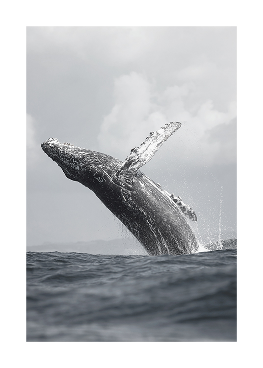 – Photograph of a whale jumping out of the ocean