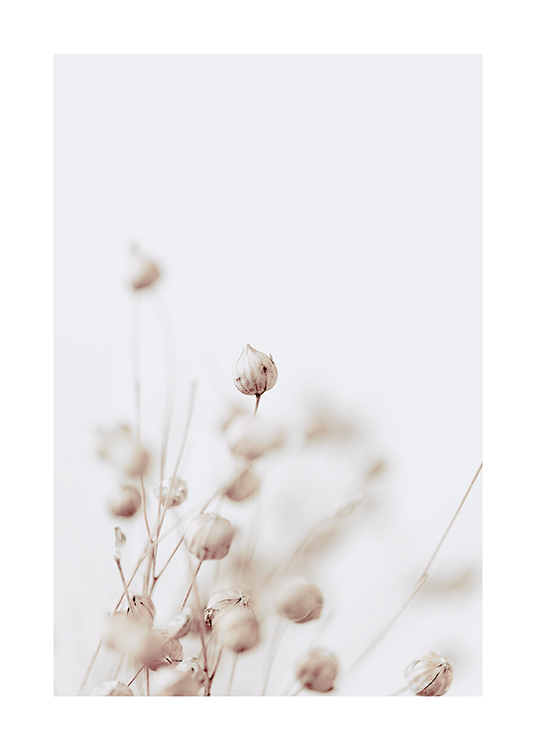 – Photograph with close up of dried flower buds in beige on a light grey background