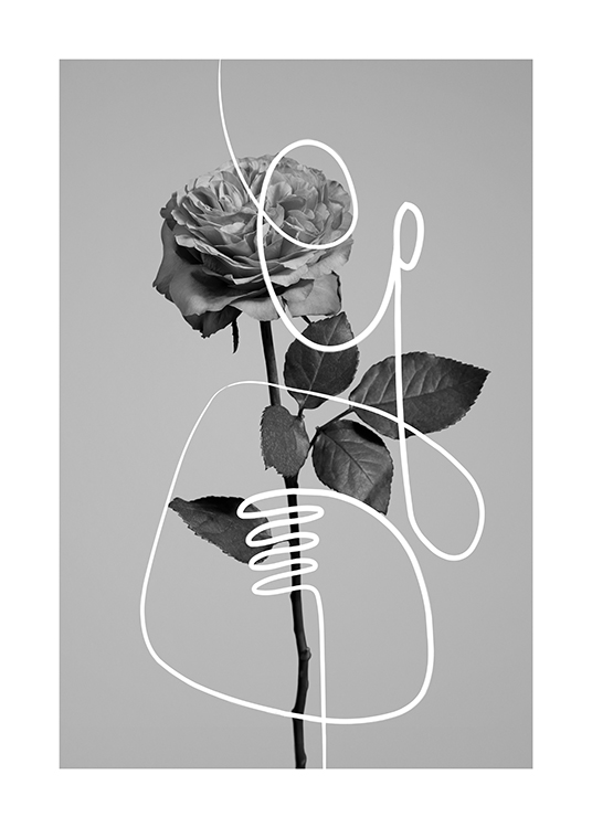 – Black and white photograph of a rose and a line art illustration in white on top of it