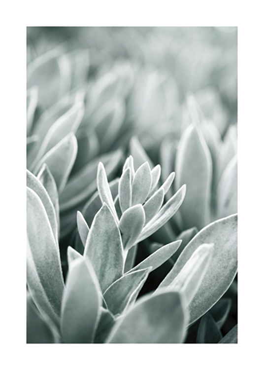 – Photograph with close up of frosty leaves in light green