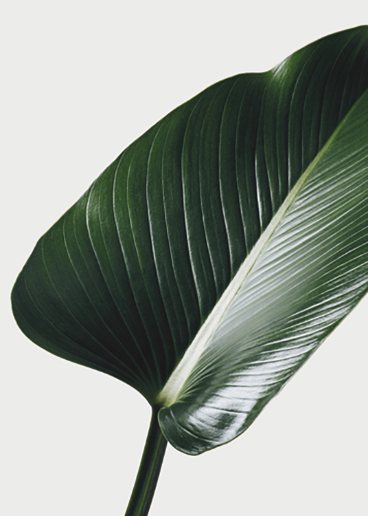 – Photograph with close up of a large leaf in green against a grey background