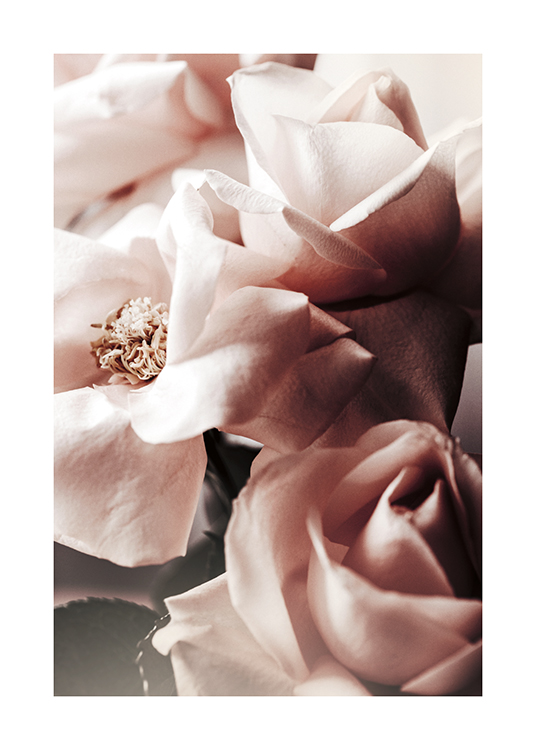 – Photograph with close up of dusty pink roses