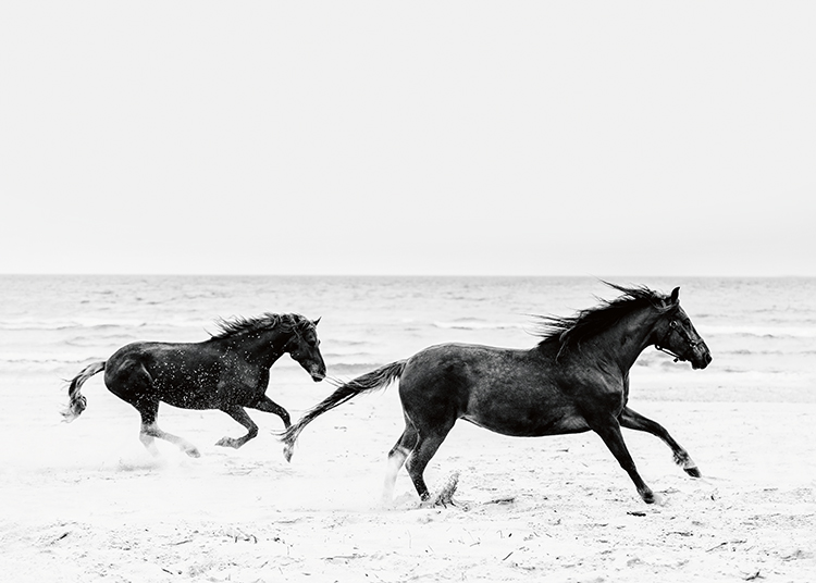 – Black and white photograph of a couple of horses running across a beach in front of the ocean