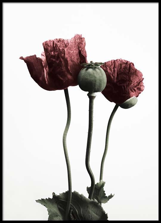 Red poppy flower poster mightylinksfo